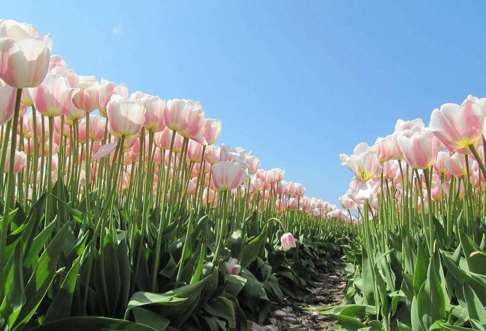 微信头像鲜花图片大全 微信图片花朵大全唯美