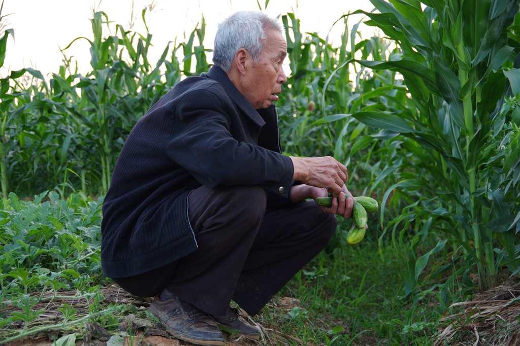 空巢的农村 老人的盼望#乡村