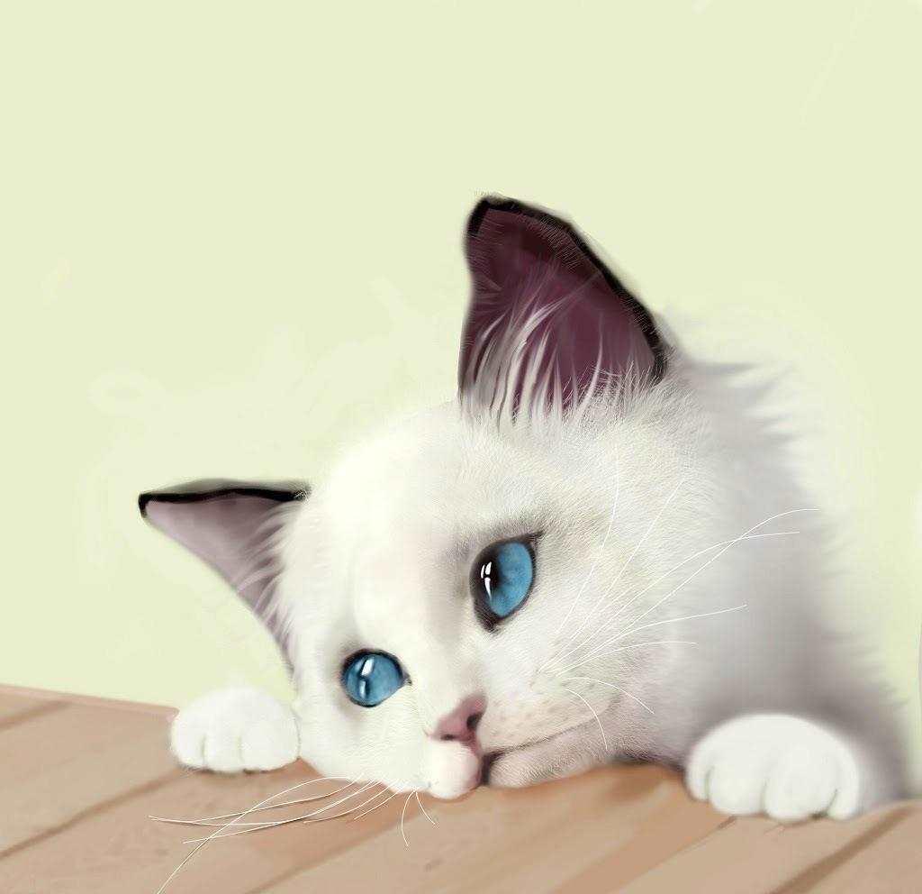 郁闷#猫咪