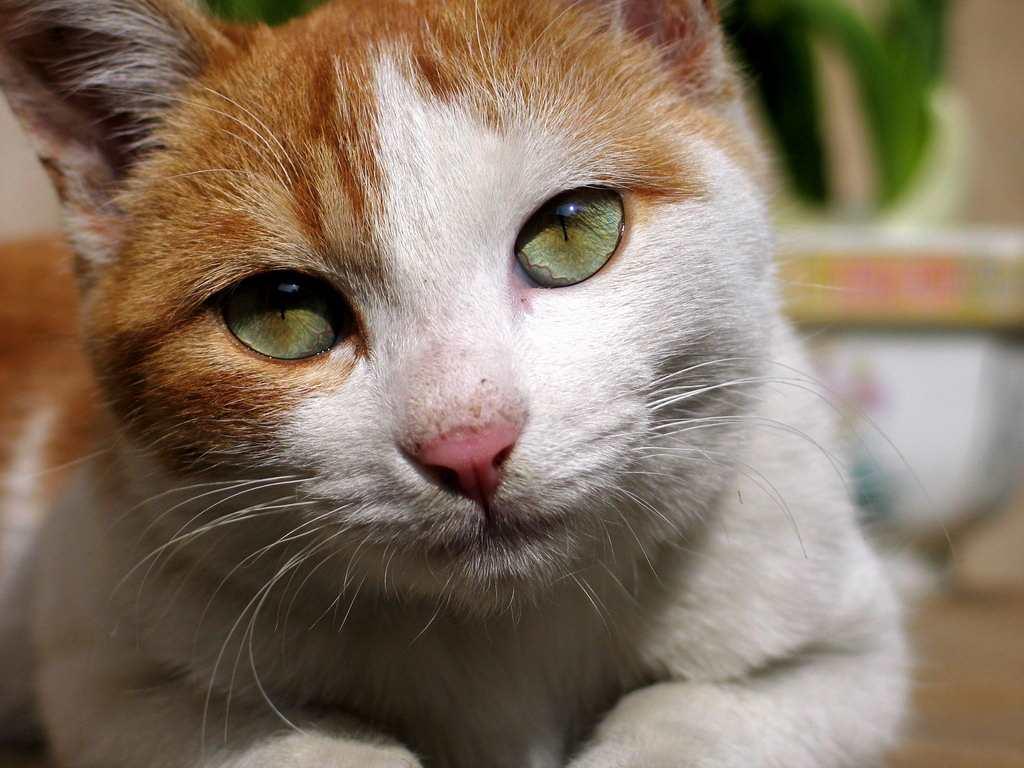 一只小猫的郁闷#猫咪