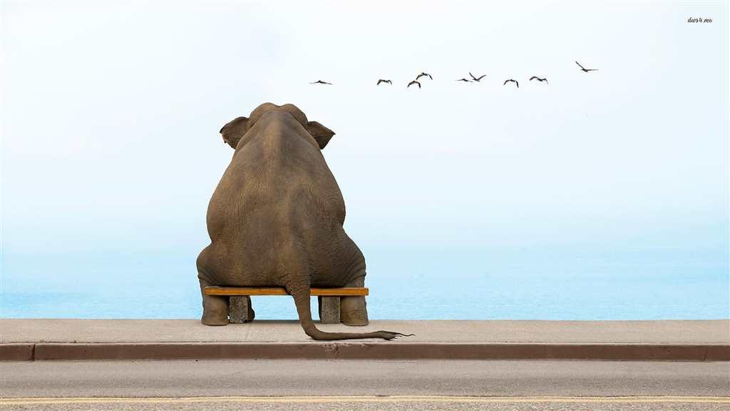 哎……郁闷呐!#卡通#动物