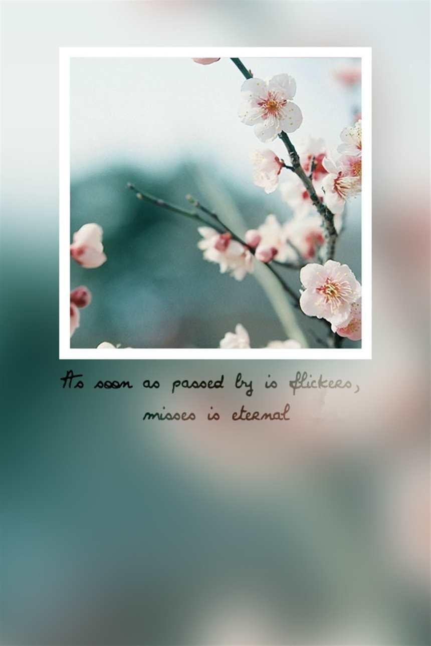 了然无趣#花朵#小清新